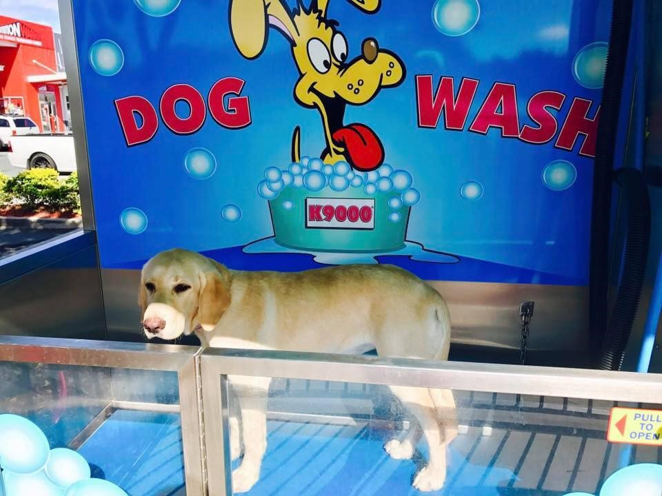 Dog wash car wash gold coast brisbane hoppys handwash cafe solutioingenieria Gallery